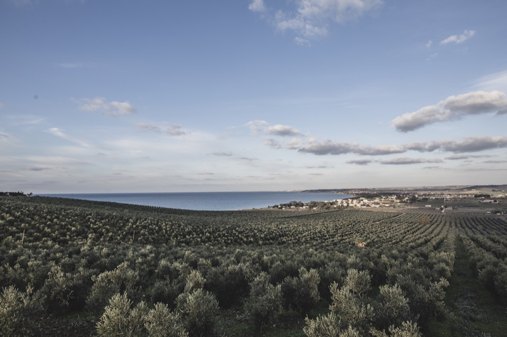 nuovo oliveto capparrina-1